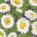 Daisies Fabric category