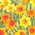 Daffodils Fabric category