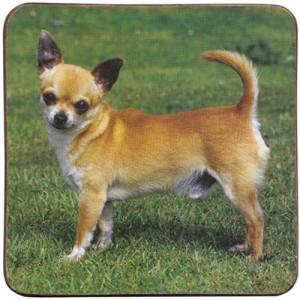 Chihuahua Dog Cork Backed Drink Coaster
