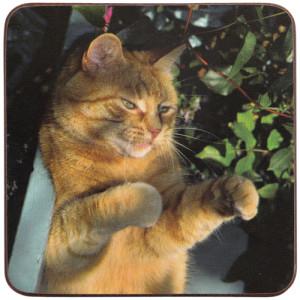 Ginger Tabby Cat Cork Backed Drink Coaster