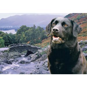 Black Labrador Dog Pet Placemat