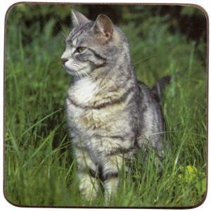 Grey Tabby Cat Cork Backed Drink Coaster
