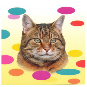 Tabby Cat Magnetic Notepad