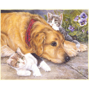 Dog and Kittens Greeting Card by Shirley Deaville