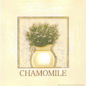 Chamomile Herb 8 x 8 Print