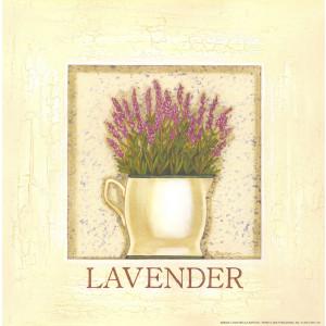 Lavender Herb 8 x 8 Print