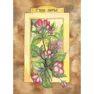 Crab Apple Flowers Design 5 x 7 Print