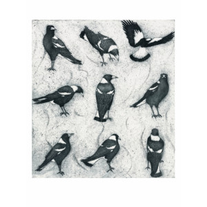Australian Magpies in Rows Greeting Card by Joseph Austin
