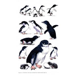 Little Fairy Penguin 100% Cotton Kitchen Tea Towel