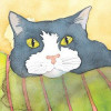 coaster-cat-face
