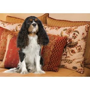 Cavalier Tricolour Dog Pet Placemat