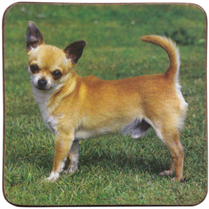 Chihuahua Dog Cork Backed Drink Coaster
