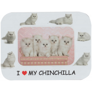Chinchilla Cat Magnetic Photo Frame