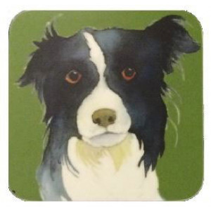 coaster-border-collie