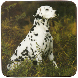 Dalmatian Dog Cork Backed Drink Coaster