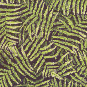 New Zealand NZ Ferns on Black Quilt Fabric