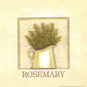 Rosemary Herb 8 x 8 Print