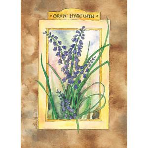 Grape Hyacinth Flowers Design 5 x 7 Print
