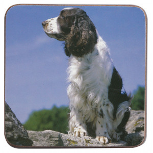 English Springer Dog Cork Backed Drink Coaster