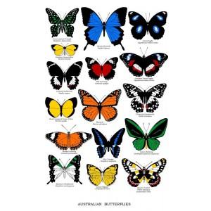 Butterfly Breeds Design 100% Cotton Kitchen Tea Towel