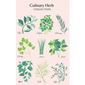 Culinary Herbs Sage Rosemary Dill 100% Cotton Kitchen Tea Towel